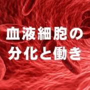 血液細胞の分化と働き