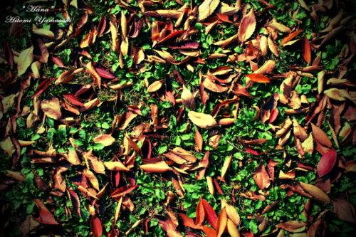 落葉と雑草