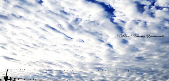 ウロコ雲の朝