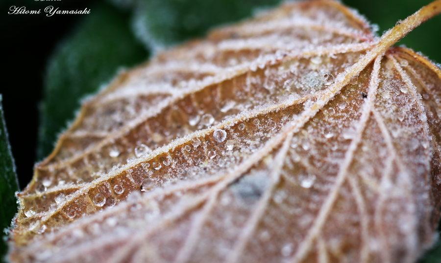 落ち葉と氷