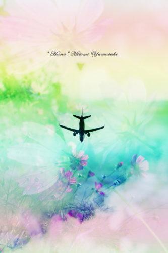 飛行機とコスモス